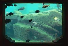 Aquarium-Fenster Stockfotografie