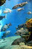 Aquarium Finisterrae Royalty Free Stock Photography