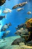Aquarium Finisterrae Photographie stock libre de droits