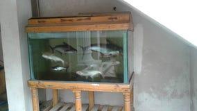 Aquarium-Fisch-Stand stockbilder
