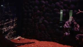 Aquarium stock video