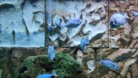 Aquarium stock video footage