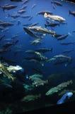 Aquarium - Fische Glas-versahen Behälter @Alesund, Norwegen mit Seiten Stockfotografie