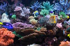 Aquarium fischt das Leben des tiefen Ozeans Lizenzfreies Stockbild