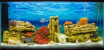 Aquarium with fish (Аквариум с рыбками). Photo of exotic fish in home aquarium Royalty Free Stock Photos