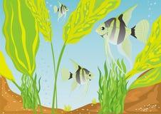 Aquarium fish. A variety of aquarium fish. Aquarium fishes in their natural habitat Stock Image