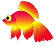 Aquarium fish. Bright and colorful, beautiful aquarium fish Stock Image