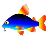 Aquarium fish. Bright and colorful, beautiful aquarium fish Royalty Free Stock Photography