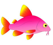 Aquarium fish. Bright and colorful, beautiful aquarium fish Stock Images