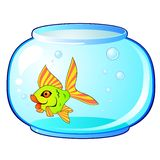 Aquarium and fish Stock Photo