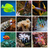 Aquarium Fish. Various colorful fish and corals in the aquarium Royalty Free Stock Photography