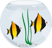 Aquarium fish. Exotic fish in a glass aquarium on a white background in cartoon style Royalty Free Stock Photos