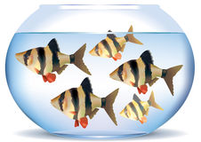 Aquarium with fish Stock Image