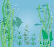 Aquarium with fish. Aquarium background with fish and algae Stock Images