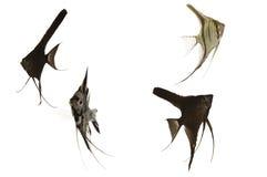 aquarium fish Στοκ Εικόνα