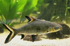Aquarium Fish 4 Royalty Free Stock Photos