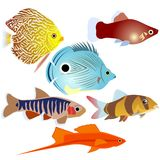 Aquarium fish-3 Images stock