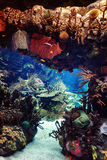 Aquarium with fish, for background. Aquarium with fish, blurred for background Royalty Free Stock Images