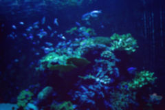 Aquarium with fish, blurred for background. Aquarium with fish blurred for background Royalty Free Stock Image