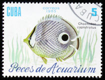Aquarium fish Chaetodon capistratus, circa 1985. MOSCOW, RUSSIA - FEBRUARY 12, 2017: A stamp printed in Cuba shows a fish with the inscription `Chaetodon Royalty Free Stock Photo