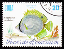 Aquarium fish Chaetodon ocellatus, circa 1985. MOSCOW, RUSSIA - FEBRUARY 12, 2017: A stamp printed in Cuba shows a fish with the inscription `Chaetodon ocellatus Royalty Free Stock Photos