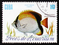 Aquarium fish Chaetodon Sedentarius, circa 1985. MOSCOW, RUSSIA - FEBRUARY 12, 2017: A stamp printed in Cuba shows a fish with the inscription `Chaetodon Stock Images