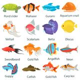 Aquarium fish color flat icons set. For web and mobile design Stock Image