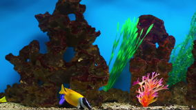 Aquarium Fish. Colorful aquarium fish. Clean environment with corals and colourful fishes. Coral reef with beautiful inhabitants and plants. Different kinds of stock video