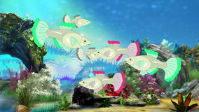 Aquarium Fish. Colorful Aquarium Fish swimming  in fish tank. Handmade animation stock video