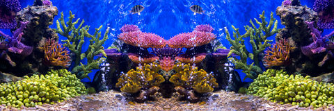 Aquarium fish with coral and aquatic animals royalty free stock photos