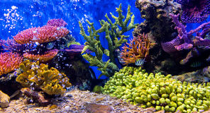 Aquarium fish with coral and aquatic animals. Aquarium fish with coral and the aquatic animals royalty free stock photography