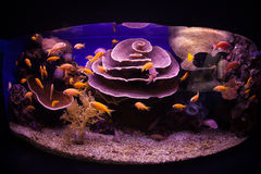 Aquarium. With fish and coral in underwater observatory Royalty Free Stock Photos