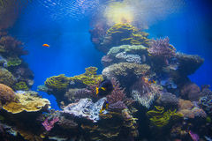 Aquarium Royalty Free Stock Images