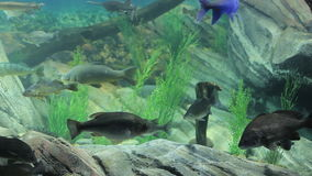 Aquarium fish. Aquarium with exotic fish. Marine life stock video