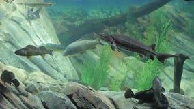 Aquarium fish. Aquarium with exotic fish. Marine life stock video