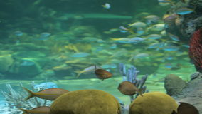 Aquarium fish. Aquarium with exotic fish. Marine life stock video footage