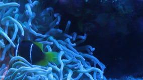 Aquarium fish stock video