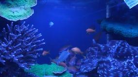 Aquarium fish. Aquarium with exotic fish. Marine life stock footage