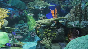 Aquarium fish. Aquarium with exotic fish. Marine life stock footage