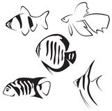 Aquarium fish. Line drawing. Stock Photo