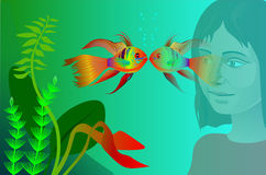 Aquarium fish. Looks at the girl Royalty Free Stock Images