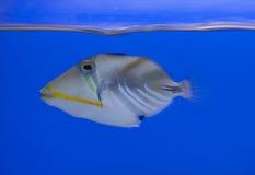 aquarium fish marine tank Στοκ εικόνα με δικαίωμα ελεύθερης χρήσης