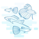 Aquarium fish.  Modern outline illustration of tropical decorative fish  on white background. Royalty Free Stock Photography