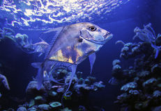 Aquarium 032 Royalty Free Stock Photography