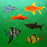 Aquarium Fish in polygon vector style Royalty Free Stock Photography