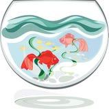 Aquarium fish red Royalty Free Stock Photography