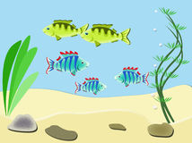 Aquarium with fish. Sea bottom with fish, seaweed, sea sand and stones Stock Photography