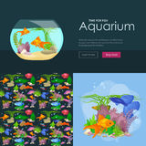 Aquarium fish, seaweed underwater, banner template layout with marine animal Royalty Free Stock Image
