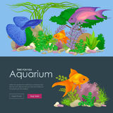 Aquarium fish, seaweed underwater, banner template layout with marine animal Royalty Free Stock Images