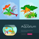 Aquarium fish, seaweed underwater, banner template layout with marine animal Royalty Free Stock Photo